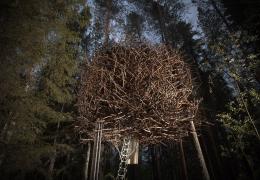 Treehotel in Sweden: The Bird's Nest