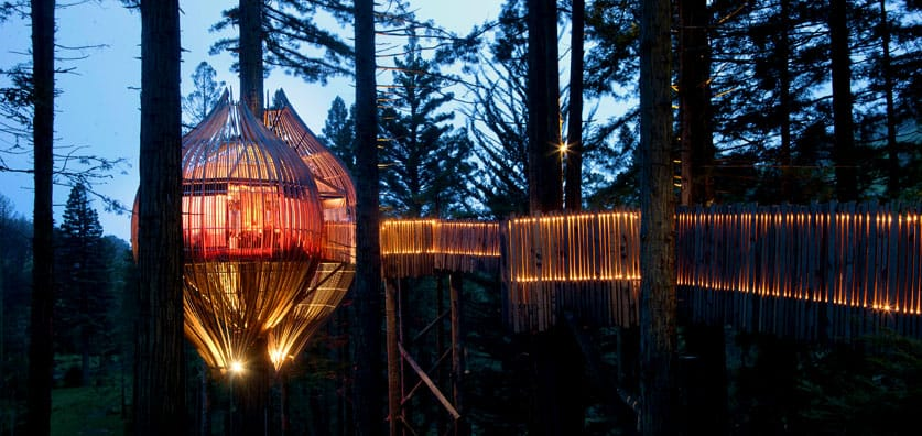 Treehouse In New Zealand Yellow Treehouse Cafe