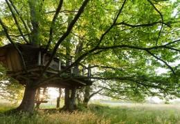 Tree house hotel in France: Folenn log cabin tree house