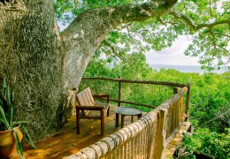 Tree house hotel in Tanzania: MOJA Treehouse