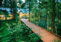 Treehouse hotel in Australia: Silky Oaks Lodge